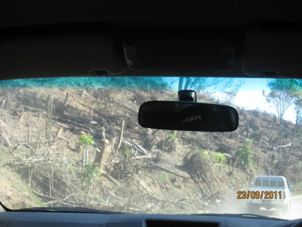 secuil hutan latoma yang gundul mengering